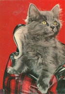 Cartolina - Gatti
