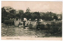 London, Kensignton Gardens (pk55902) - London