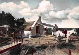 13 - Stes-Maries-de-la-Mer - Beau Plan De Cabane Des Gardians - Saintes Maries De La Mer