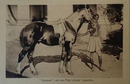 Pater Lievens // Rijpaard Generaal 19?? - België