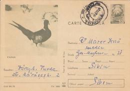 78266- PHEASANT, BIRDS, POSTCARD STATIONERY, 1970, ROMANIA - Gallinacées & Faisans