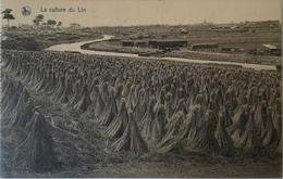 Belgique Au Travail - Culture Du Lin No 10.  // 19?? - België