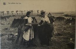 Belgique Au Travail - Culture Du Lin No 12.  // 19?? - België