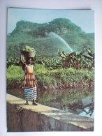 Afrique Guinée Guinea - Guinea