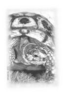 La TORTUE - Tirage Limité 12 Ex - Schildpadden