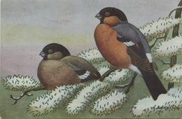 CPA BOUVREUIL PIVOINE  Extrait Guide Des Oiseaux De France - Oiseaux