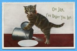 Gatto - Chat - Katze  - Cat - Gatti