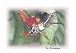 Insectes - Le HANNETON - Tirage Limité 12 Ex - Insectes