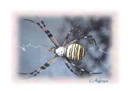 Insectes - ARAIGNEE - L'Agiope - Tirage Limité 12 Ex - Insectes