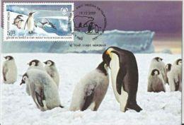 India 2009 , Penguins, Preserve The Polar Regions And Glaciers, Maximum Card - Preservare Le Regioni Polari E Ghiacciai