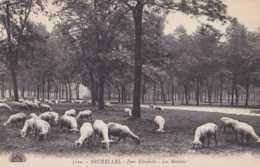 Bruxelles - Koekelberg - Parc Elisabeth - Les Moutons - Pas Circulé - TBE - Koekelberg