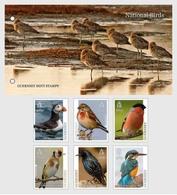 Guernsey 2019 Presentation Pack MNH Europa Birds Puffin Linnet Bullfinch Goldfinch Starling Kingfisher - Non Classificati