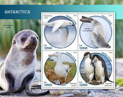 Sierra Leone. 2019 Antarctica. Penguin. (0216a)  OFFICIAL ISSUE - Pingouins & Manchots