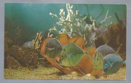US.- MIAMI, FLORIDA. Miami's Fabulous Seaquarium. Sea Wonder Of The World. - Vissen & Schaaldieren