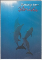 DOLPHINS In Florida,  Delphine Delfin  Large Format - Dauphins