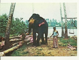 SRI LANKA / ELEPHANT AU TRAVAIL - Sri Lanka (Ceylon)