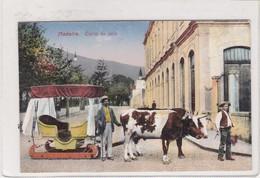 MADEIRA. CATTO DE BOIS. RP- VINTAGE PROFFESION CPA CIRCA 1900s - BLEUP - Madeira