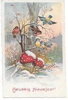Champignon, Funghi, Pilze, Mushroom, Toadstool, Clover, Birds, Oiseaux, Vogel, La Neige, Snow, In The Woods - Nouvel An