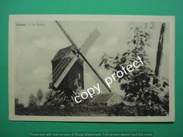 Schoot Tessenderlo De Molen Mill Moulin - Tessenderlo