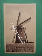 Berbroek Her De Stad De Molen Mill Moulin - Herk-de-Stad