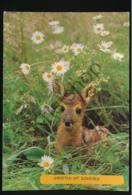 Someren - Bambi [AA39 3.530 - Nederland