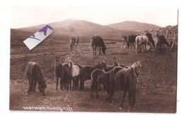 RP DARTMOOR PONIES DEVON No. 11777 CHAPMAN & SON DAWLISH UNUSED - England