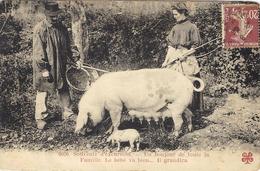6026- Souvenir D'excursion.... Un Bonjour De Toute La Famille .... Ed. Tesson - Cochons