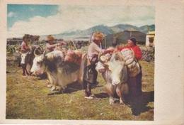 CHINA-Tibet REGULAR POST CARD ND MINT/Good Condition - China