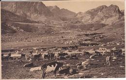 36 POSTAL DE ANDORRA DE PAS DE LA CASA - LA VACADA (VALENTI CLAVEROL) - Andorra