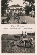 *CAFE PIERRE. JARDIN ZOOLOGIQUE - Sarrebourg