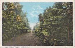 POSTAL DE HONOLULU DE TREE FERNS ON VOLCANO ROAD  (HAWAII) - Honolulu