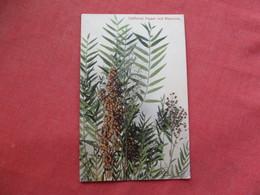 California   Pepper & Blossoms Ref 3260 - Trees