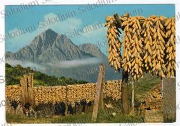 Abruzzo Gran Sasso Pannocchie Agricoltura Antichi Mestieri - Italy