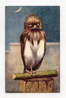"""Animal Expressions . Le Hiboux . Owls Eulen  """""""" OILETTE """""""" - 1900-1949"""