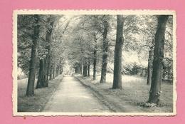 C.P. Woluwe-Saint-Lambert  = Parc Communal  :  Entrée  Principale - Woluwe-St-Lambert - St-Lambrechts-Woluwe