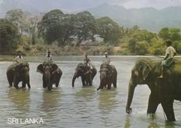 Postcard Elephants Bath Katugastota Kandy Sri Lanka [ Elephant Interest ] My Ref  B23513 - Elephants