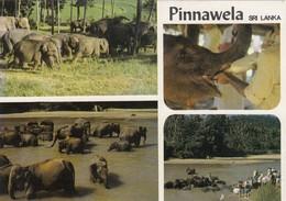 Postcard Elephant Orphanage & Captive Breeding Centre Pinnawela Sri Lanka [ Elephant Interest ] My Ref  B23514 - Elephants