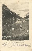 Chiesa Valmalenco (Sondrio) Passo Del Muretto E Ghiacciaio Di Forbesina, Cacciatore Con Il Cane - Sondrio