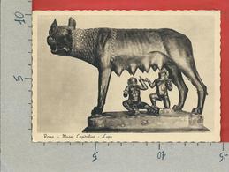 CARTOLINA NV ITALIA - ROMA - Museo Capitolino - Lupa - 10 X 15 - Belle-Arti