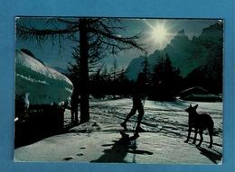 VALLE D'AOSTA COURMAYEUR VAL FERRET , SKIEUR ET BERGER ALLEMAND - Sports D'hiver