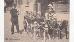 Laitiere Flamende, Karren Mit Hundegespann, Polizeikontrolle - Belgien