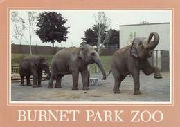 "SYRACUSE, New York, 1950-60s; Burnet Park Zoo, Elephants ""Romany"", ""Babe"" And ""Siri"" - Elephants"