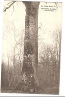 88 - MARTIGNY-LES-BAINS - Le Chêne Henry IV à Proximité Du Chêne Des Partisans - Autres Communes