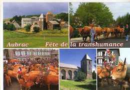 12 AUBRAC Fete De La Transhumance, Vaches Eglise, Notre Dame XII°s - Frankreich