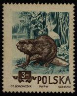 Poland Polen Pologne 1954 ** MNH. Beaver Biber Castor - Nager