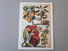Affiche Décoration Dessins De Fruits : Abricots, Grenades, Amandes & - Affiches