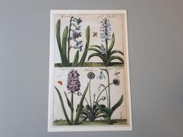 Affiche Décoration Dessins De Fleurs : Dipcadi, Jacinthe,  Satyrion, Le Madelievien & - Affiches