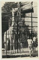 AK  Giraffe Zoo Tierpark Bristol Clifton - Jirafas