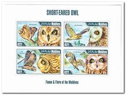 Maldiven 2013, Postfris MNH, Birds, Owls - Maldiven (1965-...)