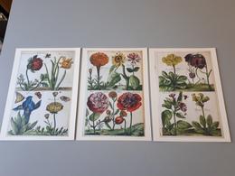 3 Affiches Décorations De Dessins De Fleurs Du Musée Des Herbes De ABOCA & - Afiches